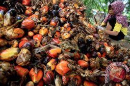Tim tetapkan harga sawit di Bengkulu