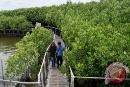 Tongke-tongke taman wisata mangrove andalan Sulawesi Selatan