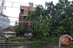 Jelang malam pergantian tahun, hujan deras tumbangkan pepohonan Jakarta