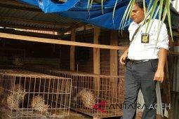 Warga pelihara 67 ekor landak ditangkap polisi