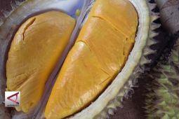 Mencari varietas unggul melalui kontes durian