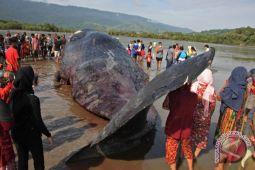 Bangkai Paus terdampar di Pantai Duta Probolinggo