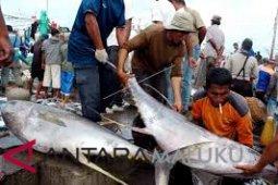 Maluku kembali ekspor 10 ton tuna segar
