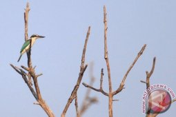 ProFauna Indonesia amati 38 jenis burung langka di hutan Damarwulan