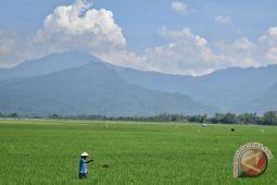 PBB: swasembada beras bukan solusi ketahanan pangan