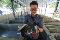 LIPI: Teknologi budidaya Terbaru untuk dorong peningkatan ekonomi nelayan