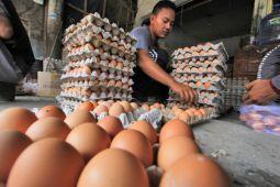 Harga telur di Jakbar naik jadi Rp28 ribu/kilogram