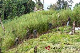 TNI kembali temukan ladang ganja di Bireuen