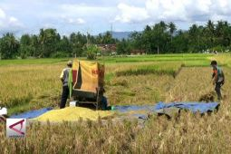 Tingkatkan produktifitas pangan cegah kemiskinan