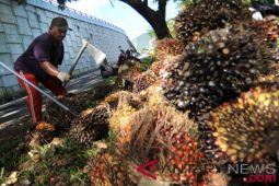 Pengusaha keberatan beli sawit sesuai ketetapan provinsi