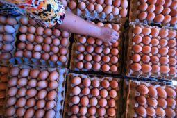 Mentan katakan disparitas harga telur sampai 60 persen