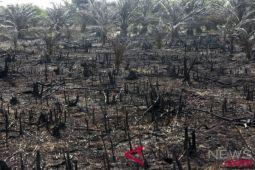 Kebakaran lahan di perkebunan sawit