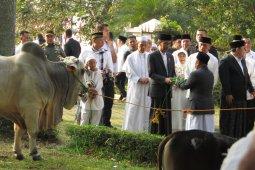 Presiden Jokowi berkurban sapi di Masjid Sunda Kelapa
