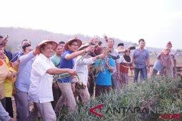 Petani bawang keluhkan harga anjlok kepada Sandiaga