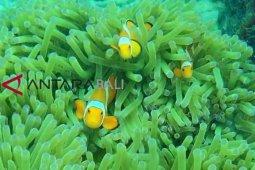 Mencari Si Nemo di Gili Rengit