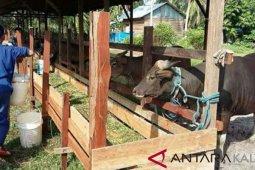 Penajam Targetkan Populasi Sapi 17.000 Ekor