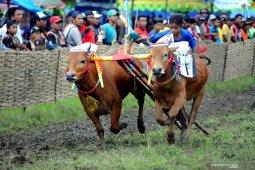 Karapan sapi Piala Presiden digelar 6 Oktober di Bangkalan