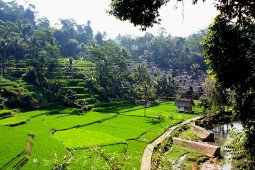 Kampung Naga di Tasikmalaya tarik wisatawan mancanegara