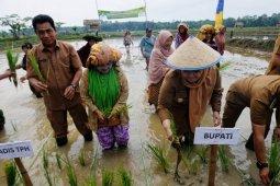 Bupati Masnah tanam padi dan berikan bantuan traktor