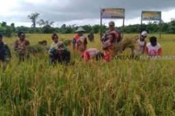 Papua Barat inventarisir lahan program cetak sawah
