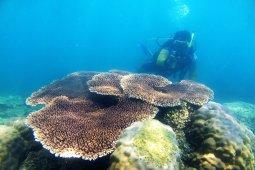 Kunjungan wisatawan asing di Pulau Kelapan tinggi