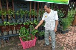 Pegunungan Arfak disiapkan jadi sentra kopi Papua Barat