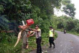Tiga pelaku pencuri kambing di Tenga - Tenga saat gempa dimaafkan korban