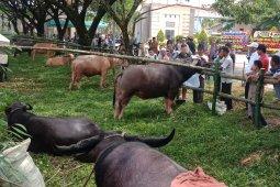 Expo ternak di Nagan Raya diduga pakai ternak sewaan dari luar daerah