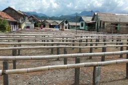 Perajin ikan asin berhenti produksi karena angin kencang