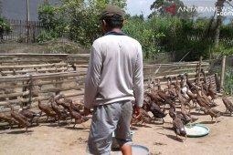 Dana Desa di Rejang Lebong untuk kembangkan potensi lokal