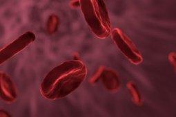 Mengenal kanker darah, gejala dan penyebabnya