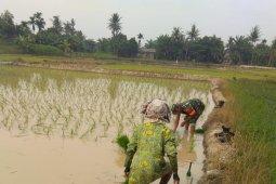 Usai lebaran, Babinsa Kodim 0204/DS langsung bantu petani