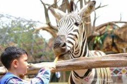 Ada Sensasi makan ditemani Zebra di RSG Bogor