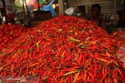 Harga cabai di Balikpapan mencapai Rp80.000 per kg