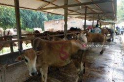 Hewan kurban untuk Tanjungbalai dari luar daerah