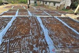 Petani menjemur biji cengkih yang baru selesai dijemur di Kampung Sabrang, Labuan, Pandeglang, Banten, Rabu (7/8/2019). Menurut petani sejak seminggu terakhir harga cengkih di tingkat pengepul terus anjlok dari Rp125 ribu perkilogram pada awal pekan lalu kini menjadi Rp75 ribu perkilogram akibat kelebihan suplai karena panen cengkeh yang bersamaan di sejumlah daerah. ANTARA FOTO/Asep Fathulrahman/<br>