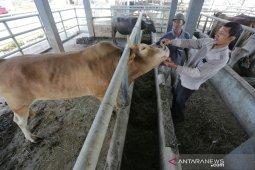 Pemeriksaan Kesehatan hewan layak sembelih
