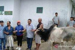 PLTA Batang Toru serahkan hewan kurban di Tapanuli Selatan