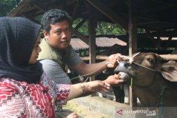 Pemkot Padangsidimpuan pastikan kesehatan hewan kurban