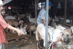 Dinas Pertanian provinsi periksa dugaan antraks di Kabupaten Gorontalo