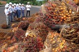 Peserta SMN 2019 antusias mendapat pengetahuan kelapa sawit
