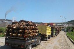 Harga sawit petani Mukomuko naik Rp70/kilogram
