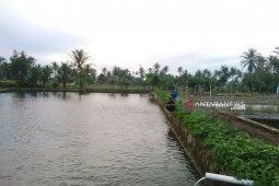 Balai benih ikan di Rejang Lebong hasilkan 3,9 juta ekor benih per tahun