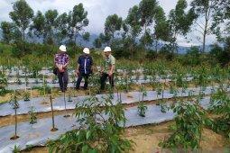 TPL bina 50 poktan untuk pola tanam tumpang sari