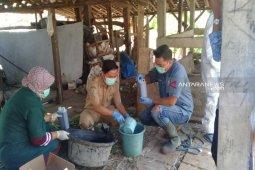UPTD Labvet gelar pelayanan kesehatan hewan di Mongolato-Telaga