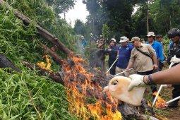 BNN musnahkan 40 ribu batang pohon ganja di Gunung  Seulawah