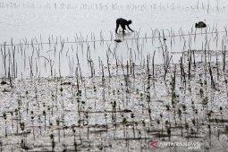 Konservasi hutan mangrove