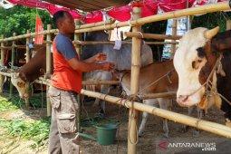Kementerian Pertanian lakukan kawin suntik 3,03 juta sapi