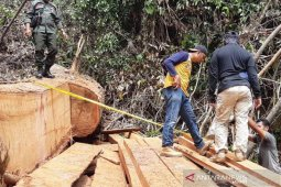 Polisi tangkap enam pembalak liar di hutan Abdya