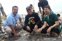Yayasan Ikebana-PT Timah tanam 27 hektare bakau di Pantai Rebo